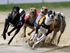 greyhound racing betting sites