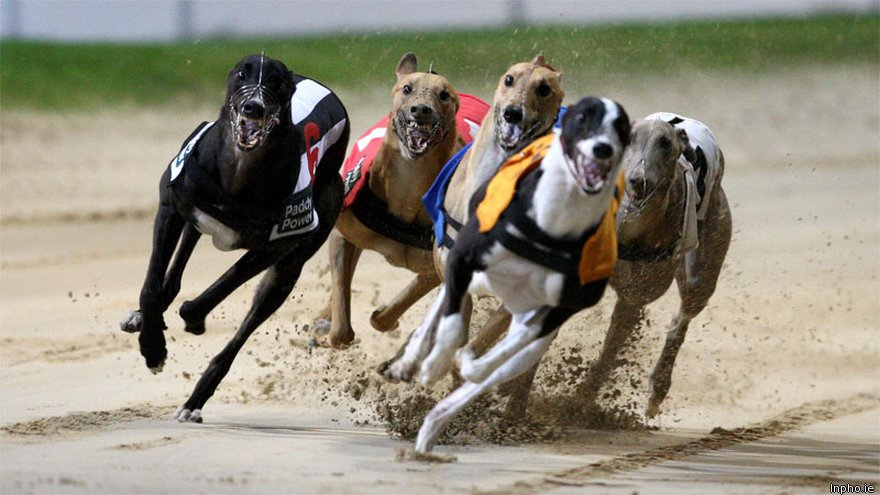 a look into the issues of greyhound racing Racing post festival stayers won by palace issue in palace issue - racing post festival stayers a look into the world of greyhound racing.