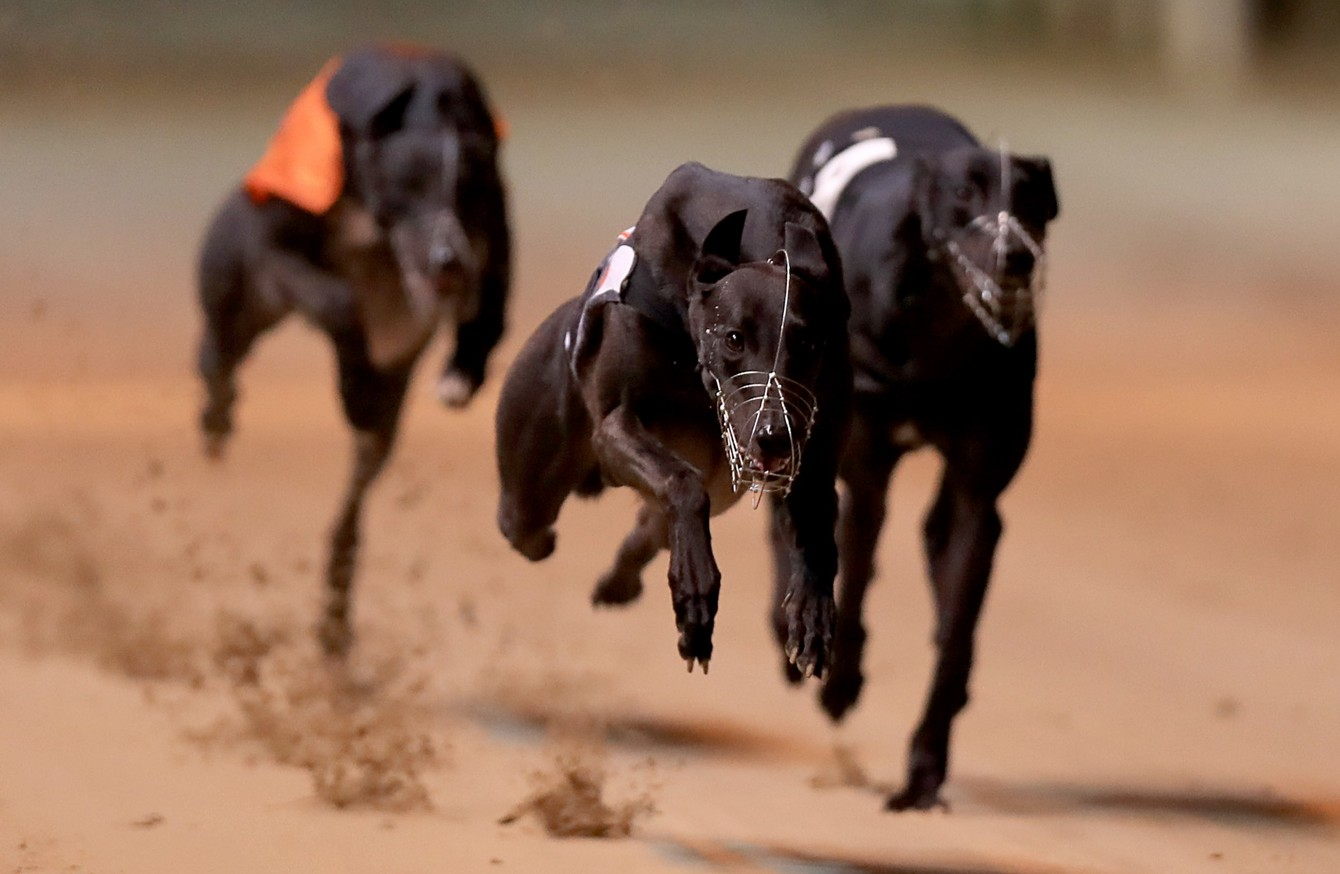 Greyhound-Racing